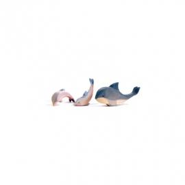 Delphin, Kopf hoch